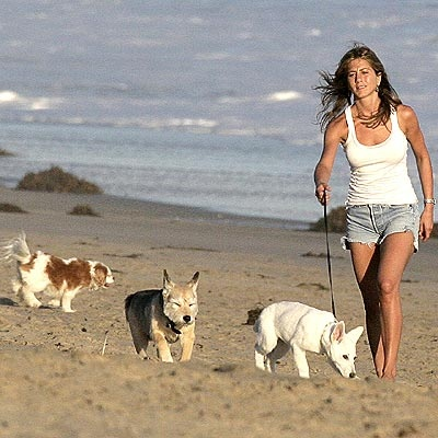 chien-jennifer-aniston